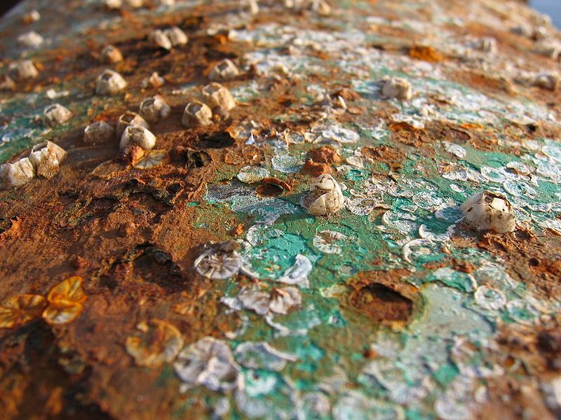 Corrosion: What is Water Damage Really Doing to Your